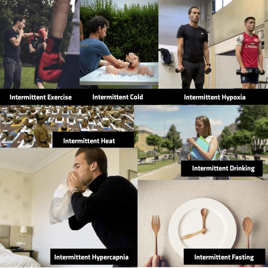 Oplijsting verschillende prikkels intermittent living; intermittent exercise, intermittent cold, intermittent hypoxia, intermittent heat, intermittent drinking, intermittent hypercapnia, intermittent fasting